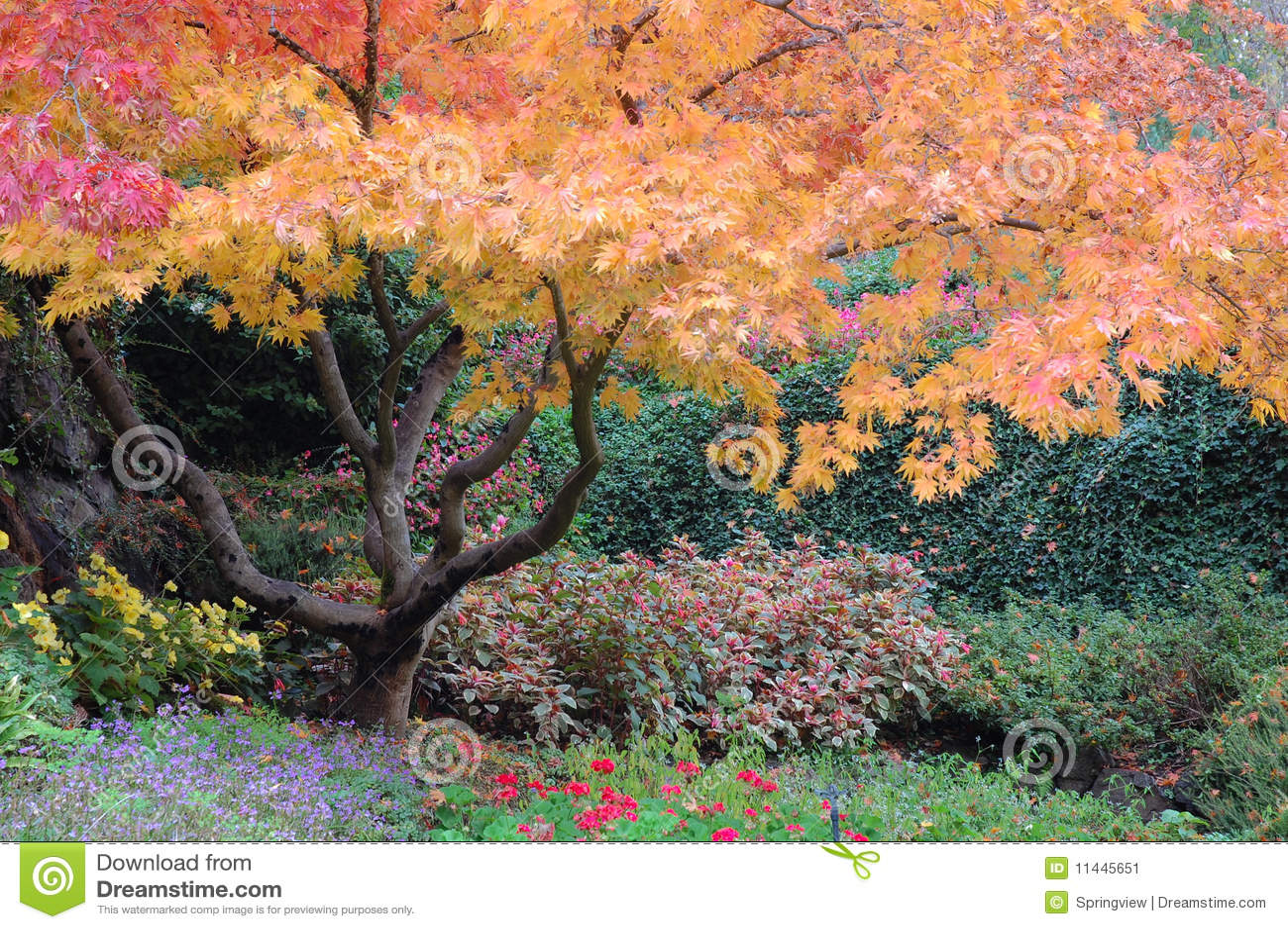 Butchart uprawia ogródek drzewa