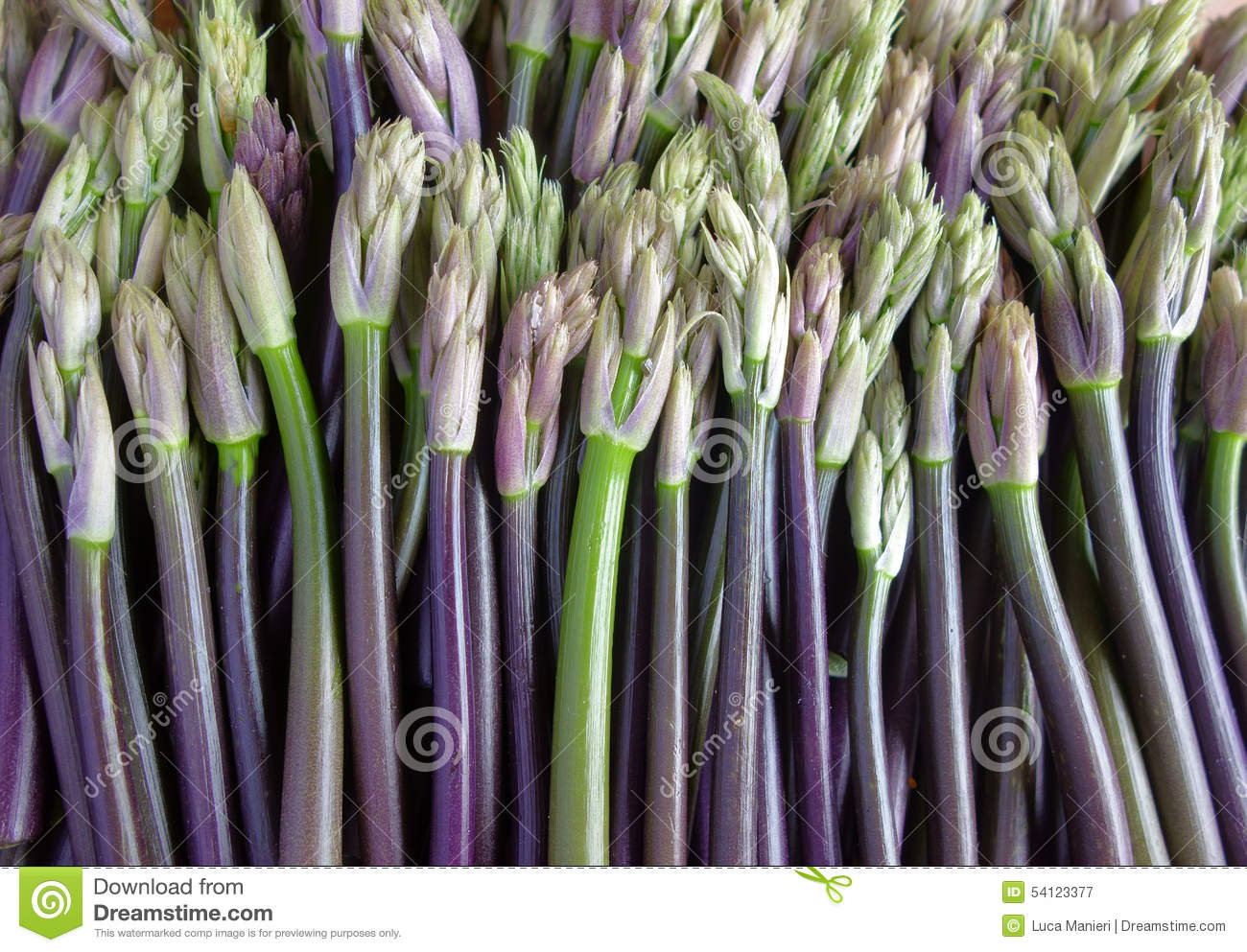 Butcher's broom shoots stock image  Image of organic - 54123377