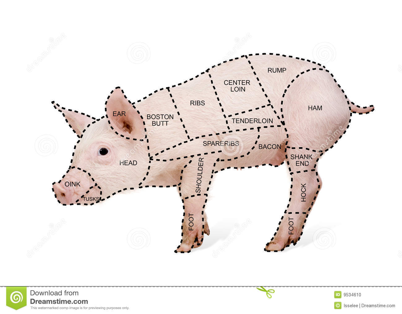 butcher s pig chart 9534610 butcher's pig chart stock photo image of oink, indoors 9534610