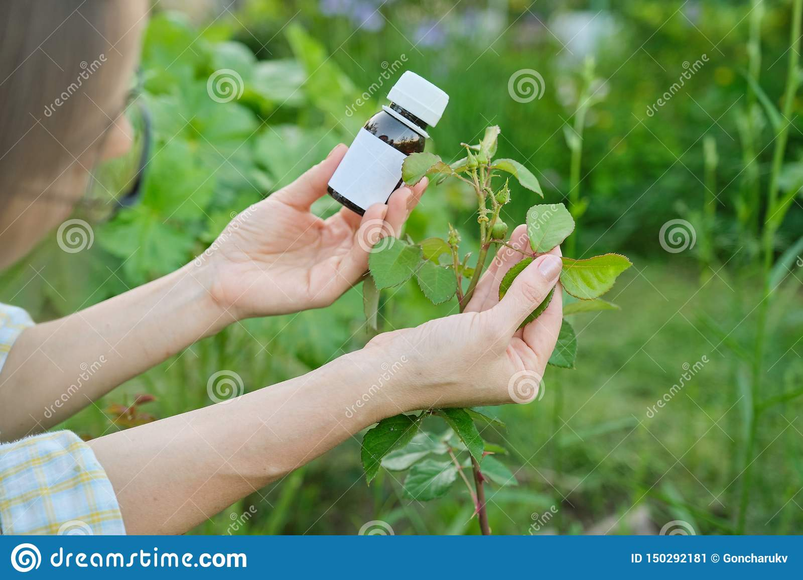 Butelka z chemicznym flitem w ogrodniczki ręce w górę, tło atakująca korówka insektów roślina wzrastał