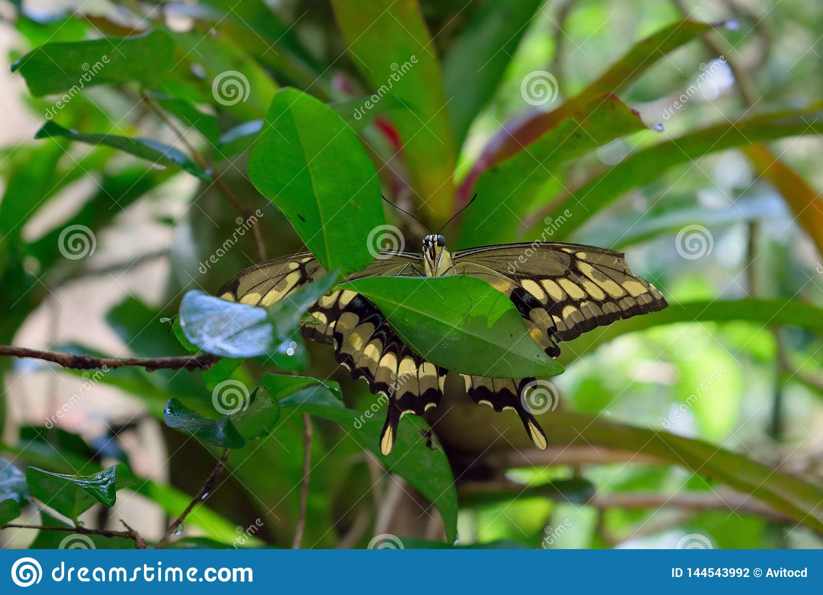 Buterrfly met open vleugels