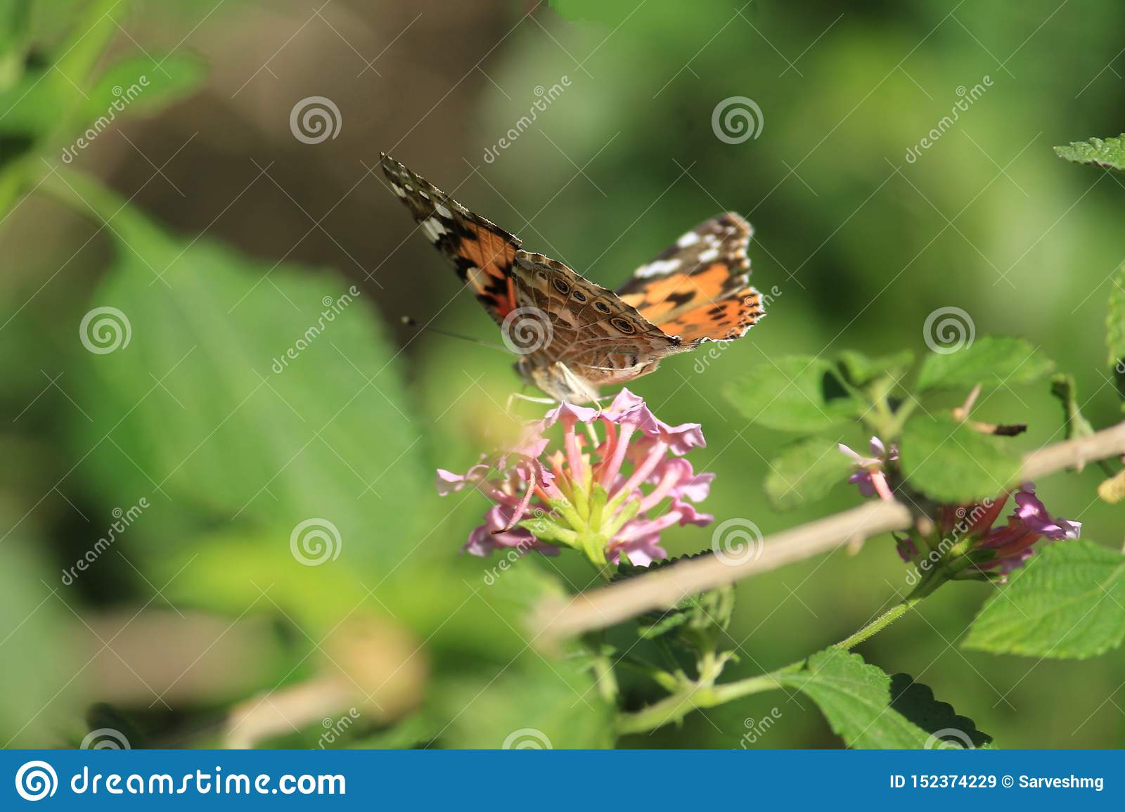 Butterfly on business with a flower