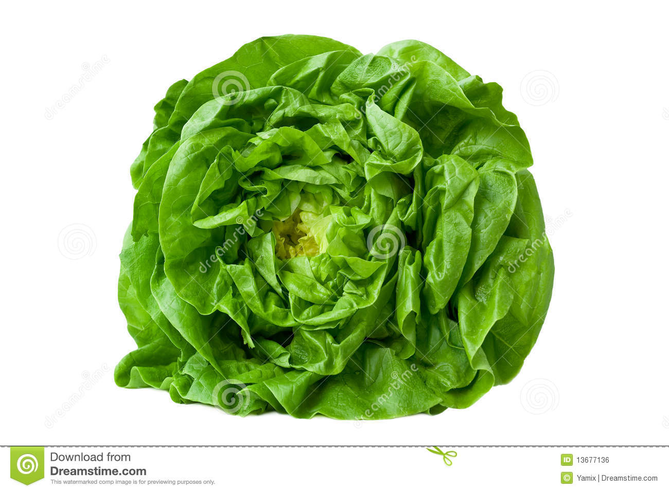 how to grow butter lettuce