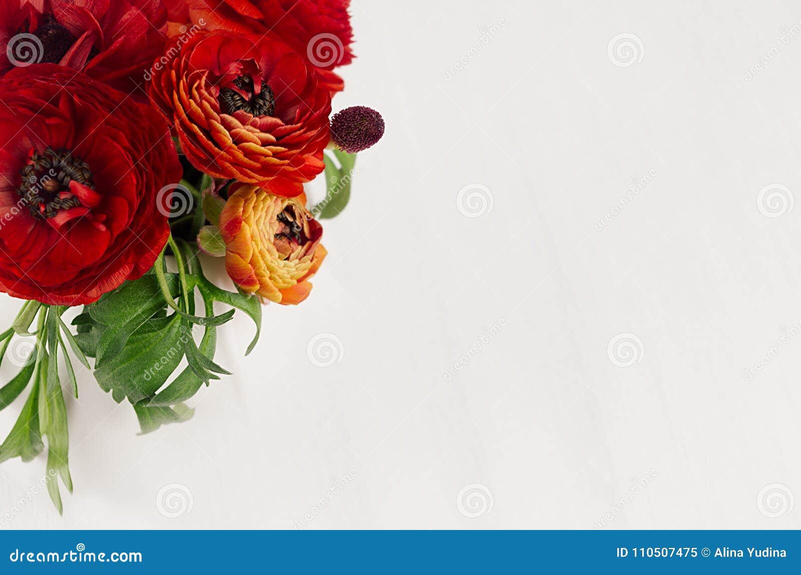 Butterblume des reichen Rotes blüht mit Draufsicht der grünen Blätter über weichen weißen Holztisch Eleganzfrühlingsblumenstrauß