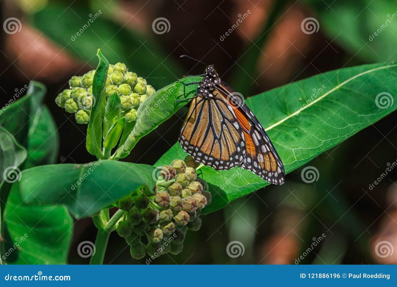 Butterfli es, passend zusammen