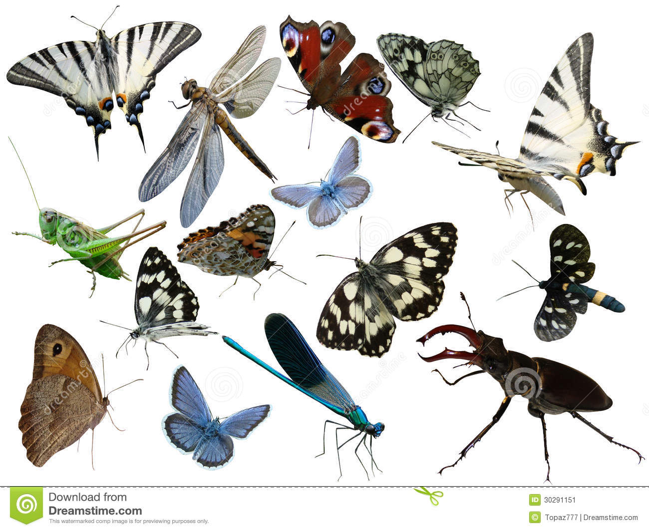 Butterflies, dragonfly, a grasshopper, other insects