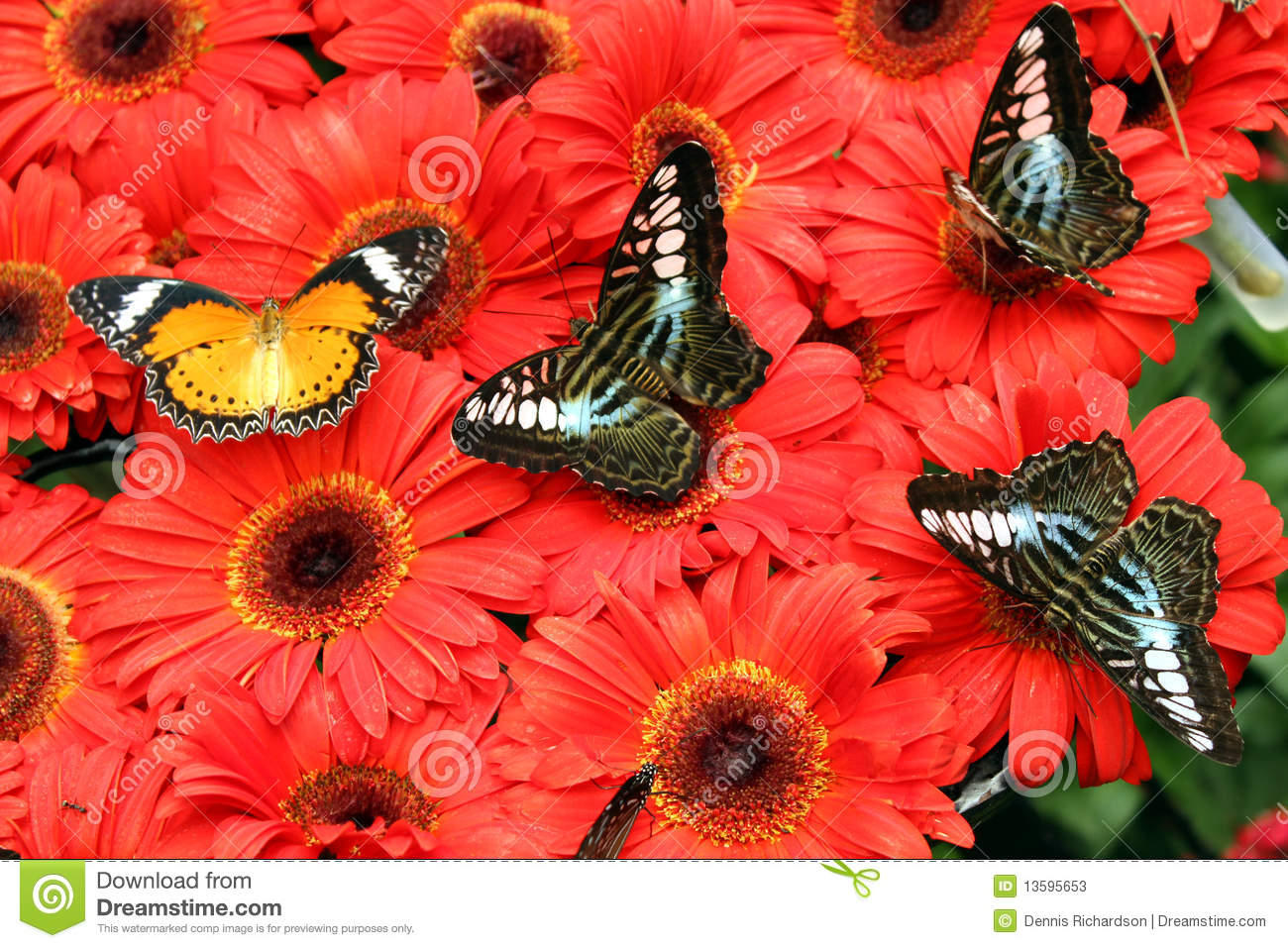 butterflies on flowers stock photos image 13595653