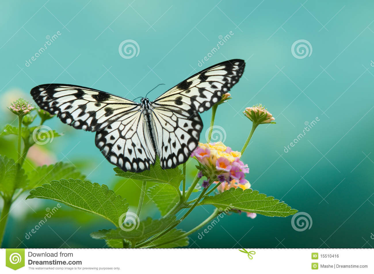 butterflies on flowers royalty free stock image image 15510416