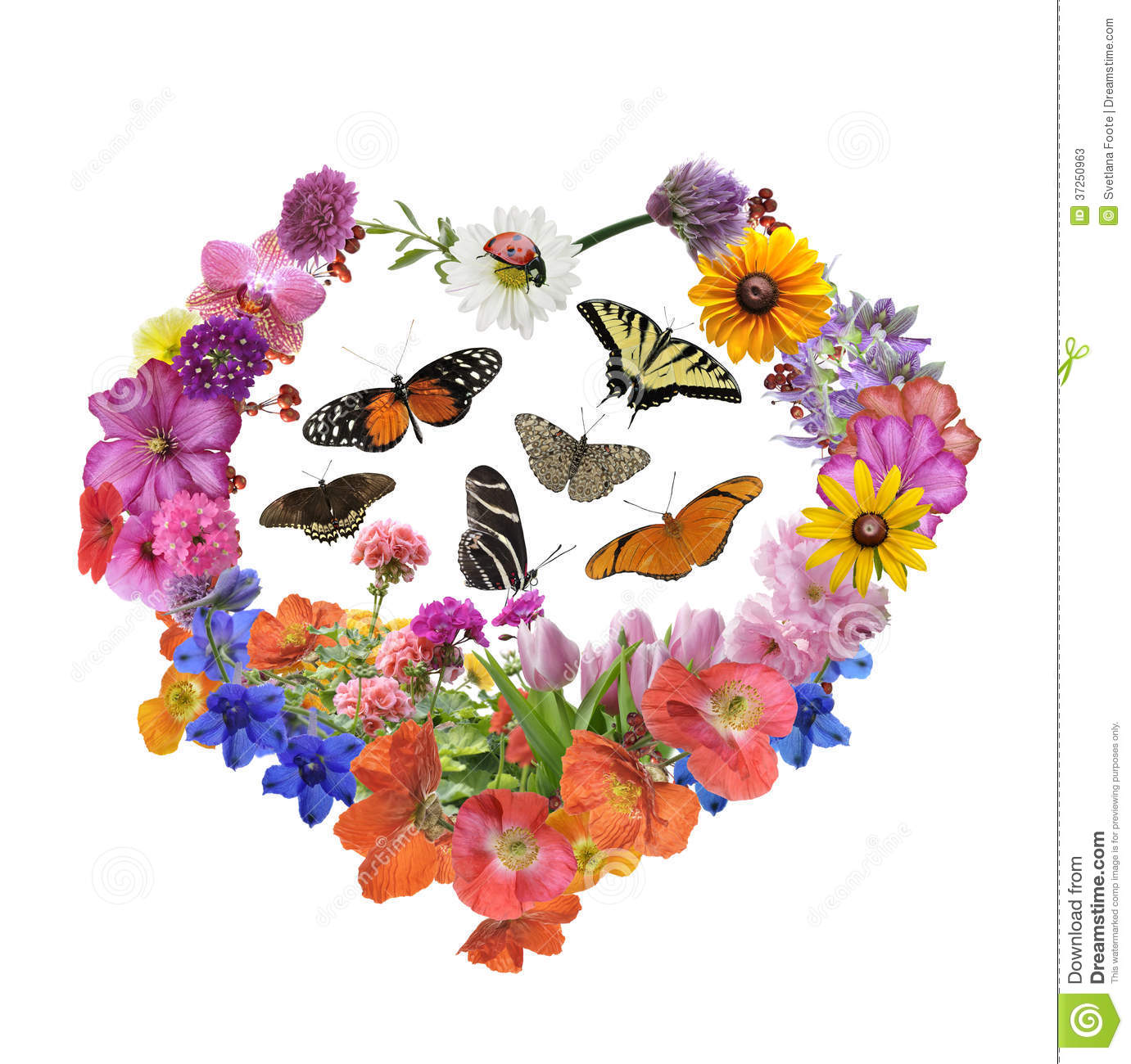 Butterflies And Flowers In Heart Shape Stock Image Image
