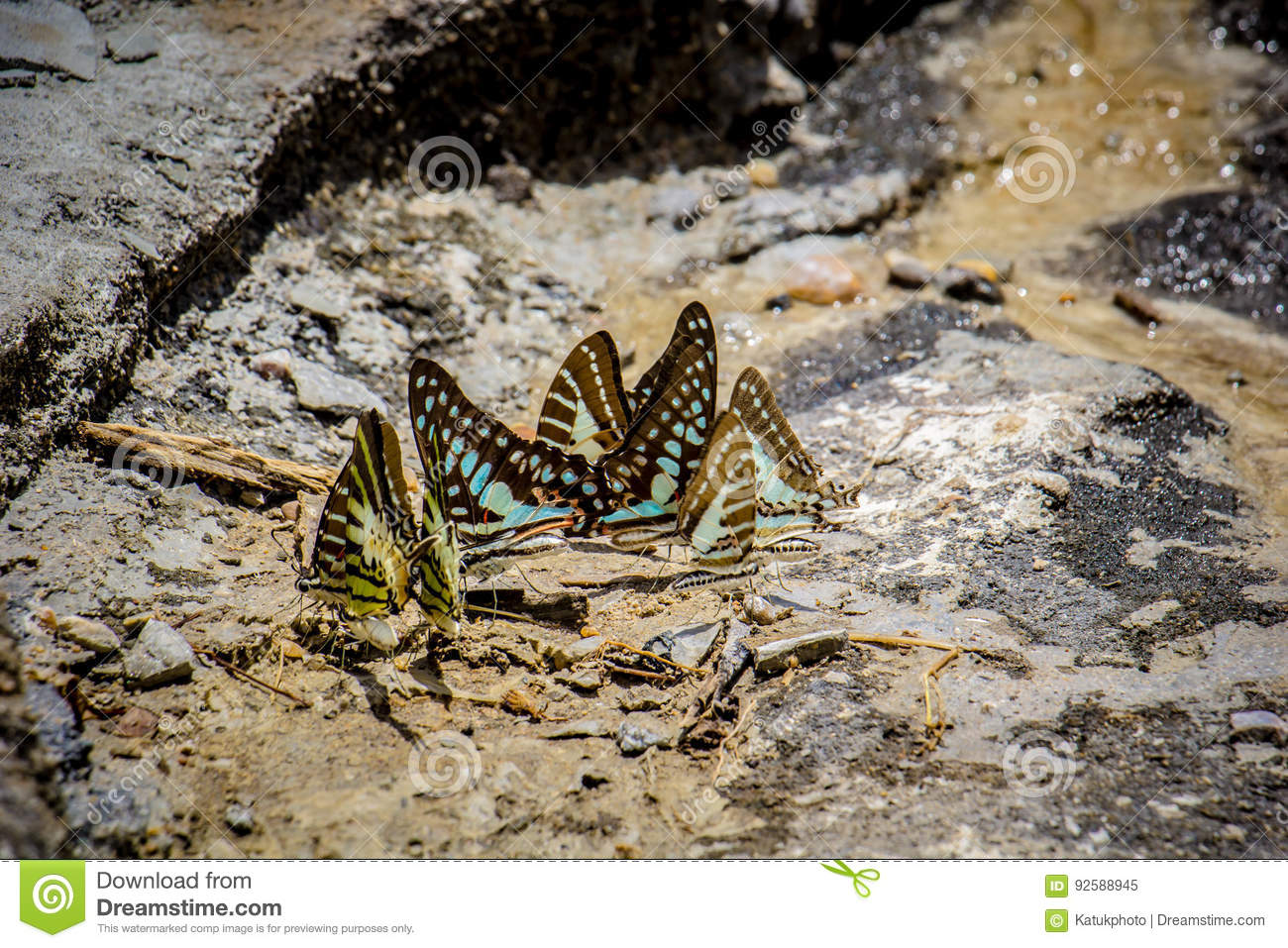 Butterflies swarm eats the minerals in the soil stock for What are soil minerals