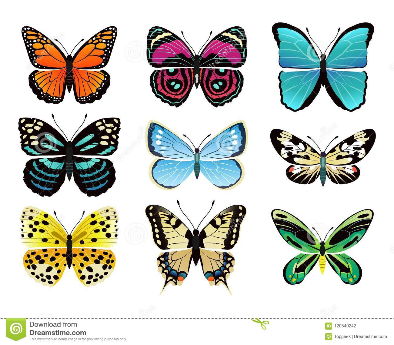 Butterflies Types Collection Vector Illustration Stock