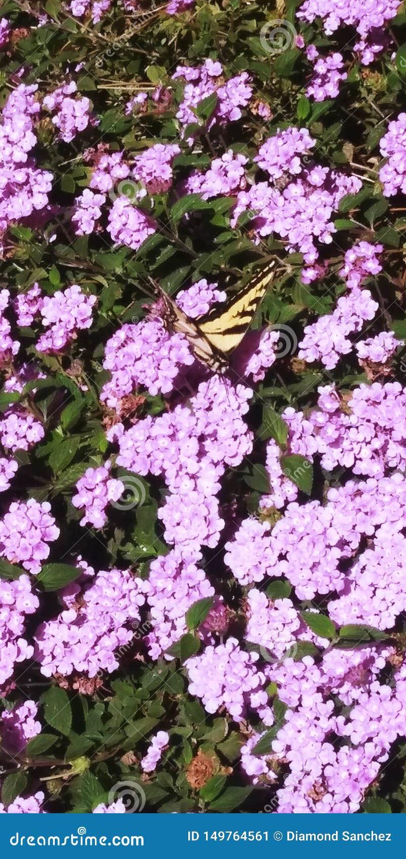 Butterflight