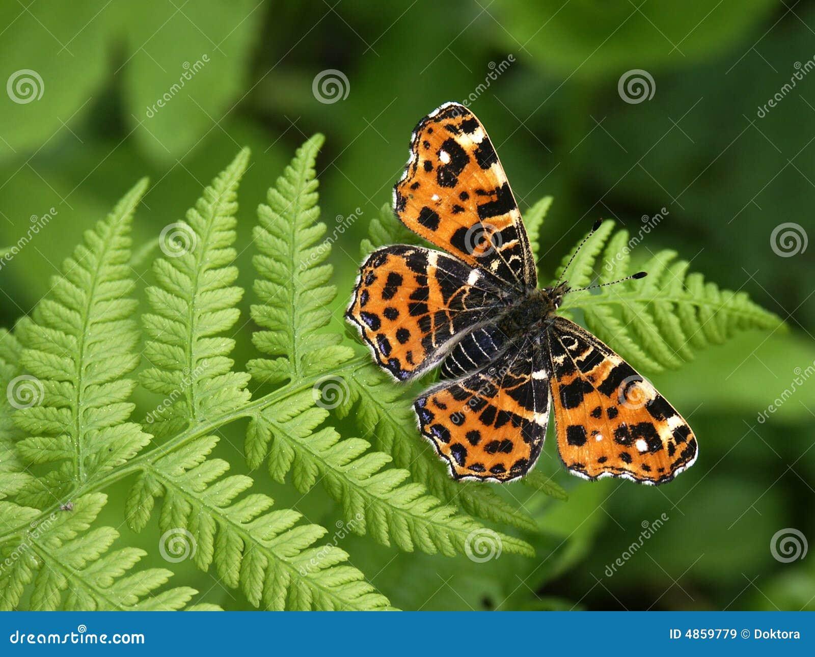 Butterfly #01