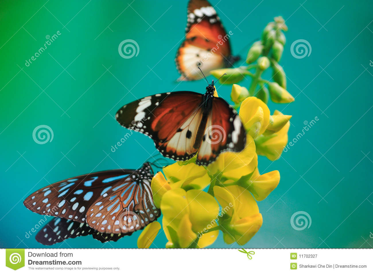 Butterflies, yellow flower on turquoise background