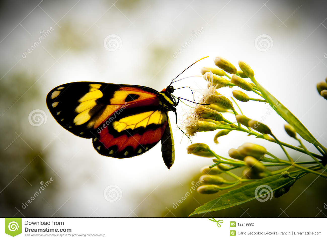 Download Butterfly stock photo. Image of macro, bokeh, food, yellow - 12249882