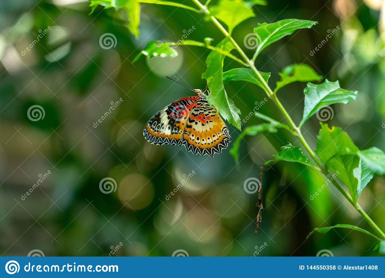 Butterfly sitting on a leafy branch