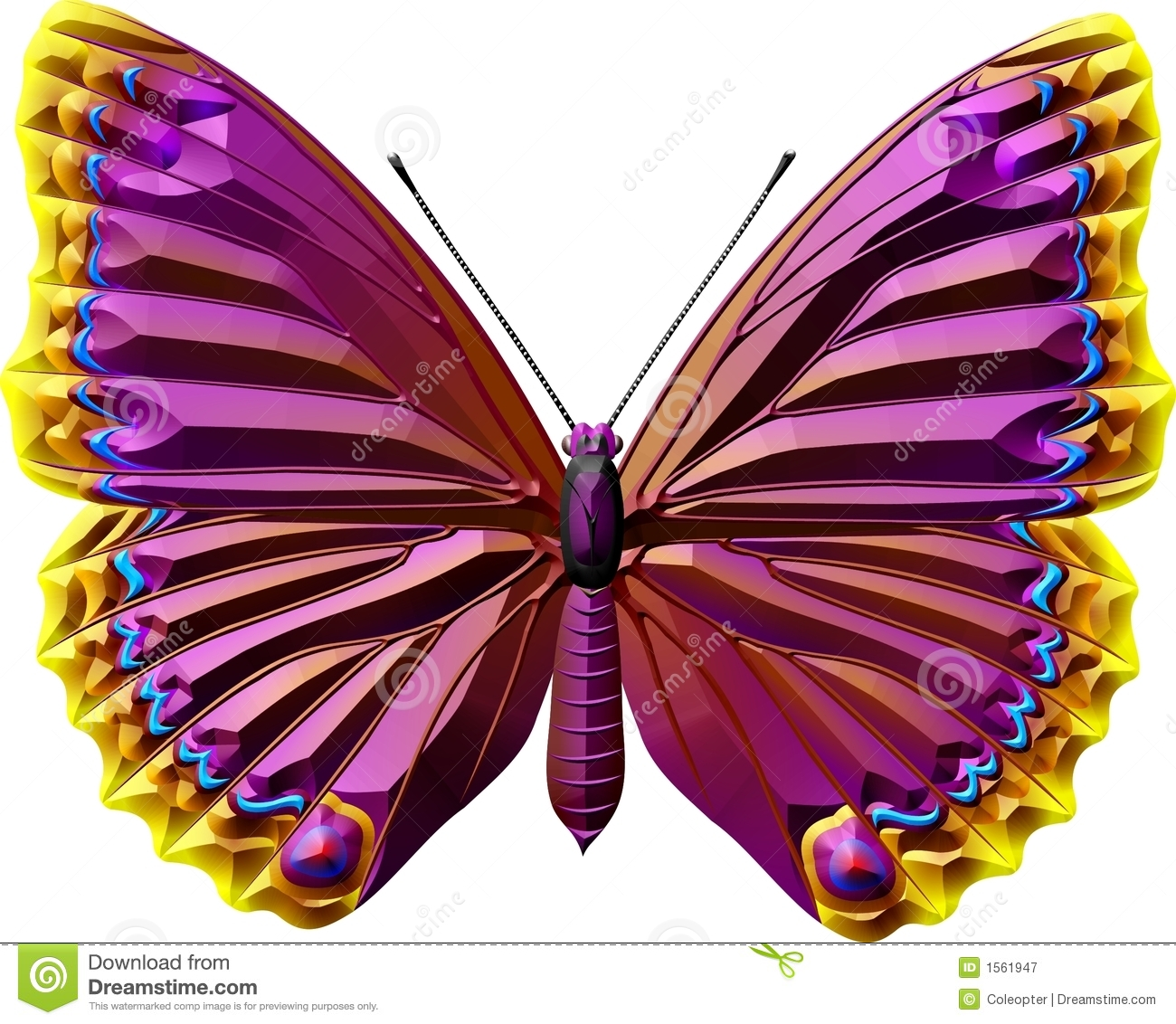 Butterfly Royalty Free Stock Photography Image 1561947