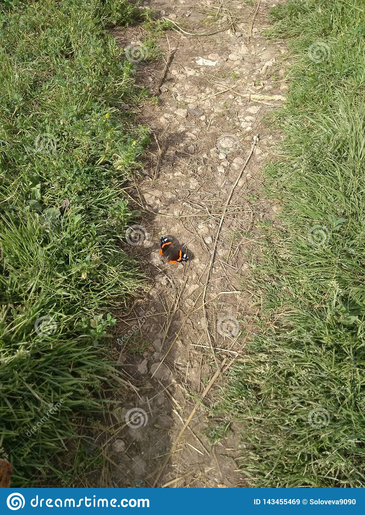 Butterfly Admiral on the path