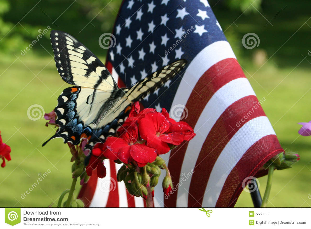 ee03f57327b Butterfly and american flag stock image of wavy lepidoptera jpg 1300x957 American  flag butterfly