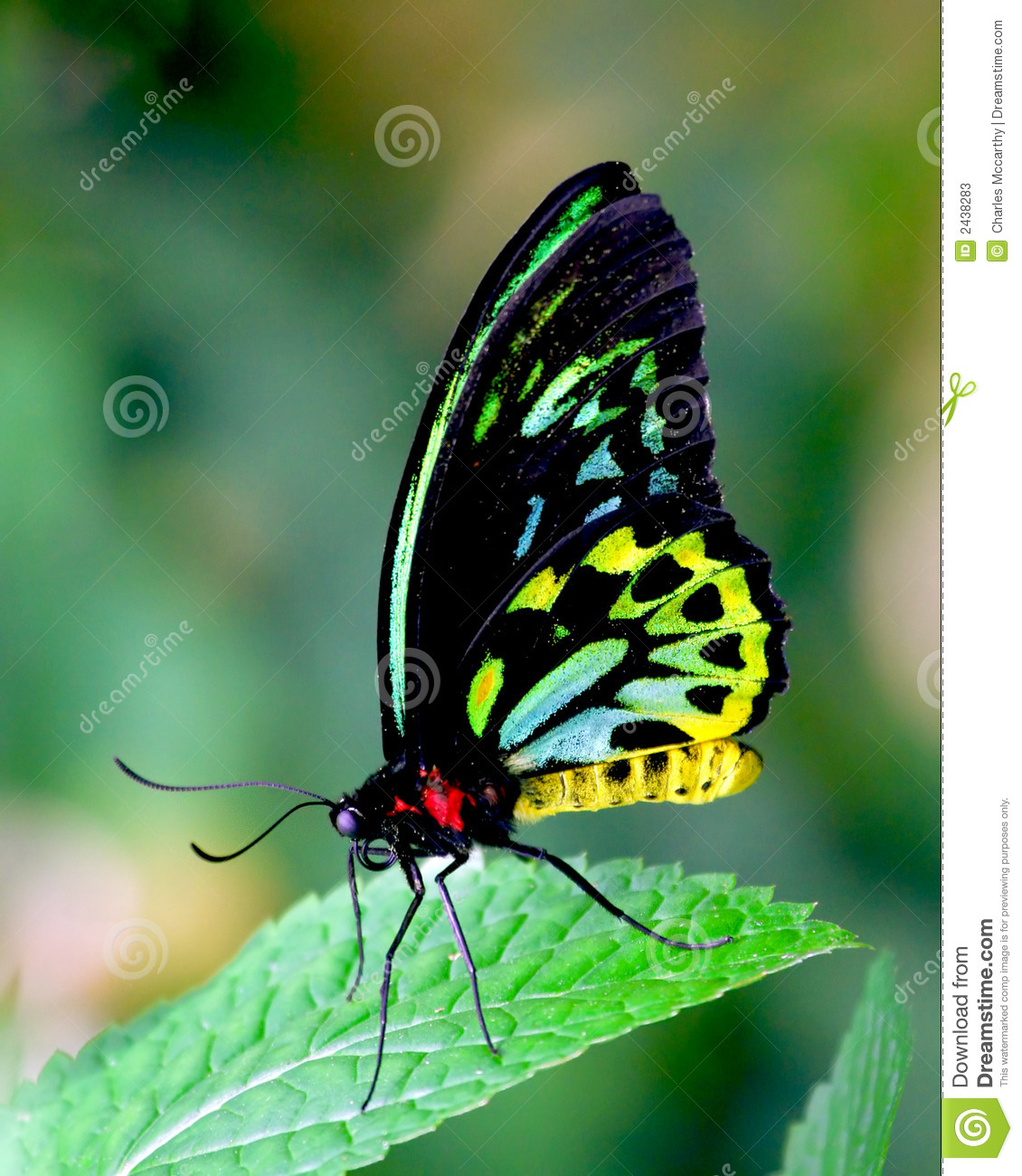 Butterfly beauty stock image Image of colors free