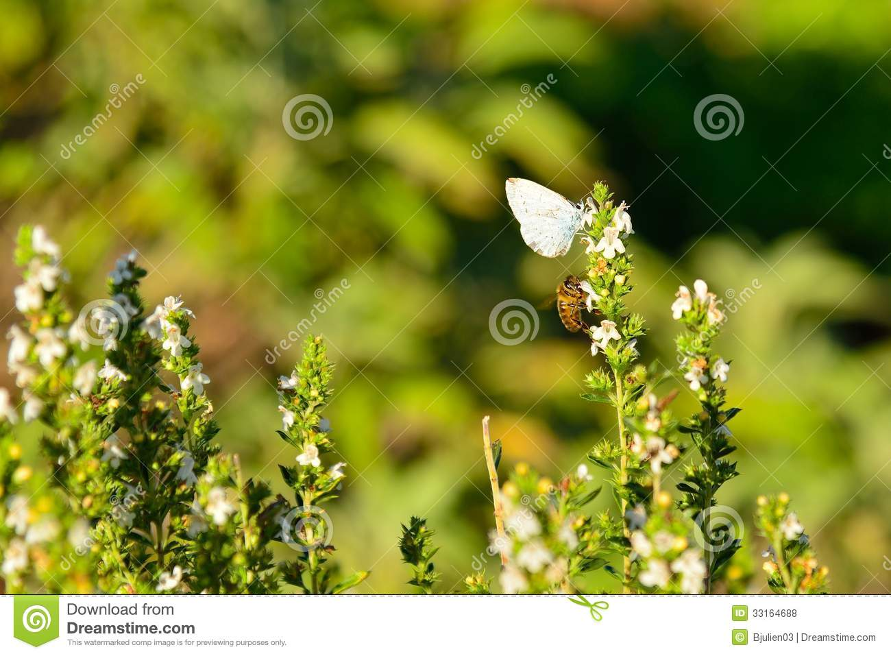 Butterfly And Bee Royalty Free Stock Photos Image 33164688