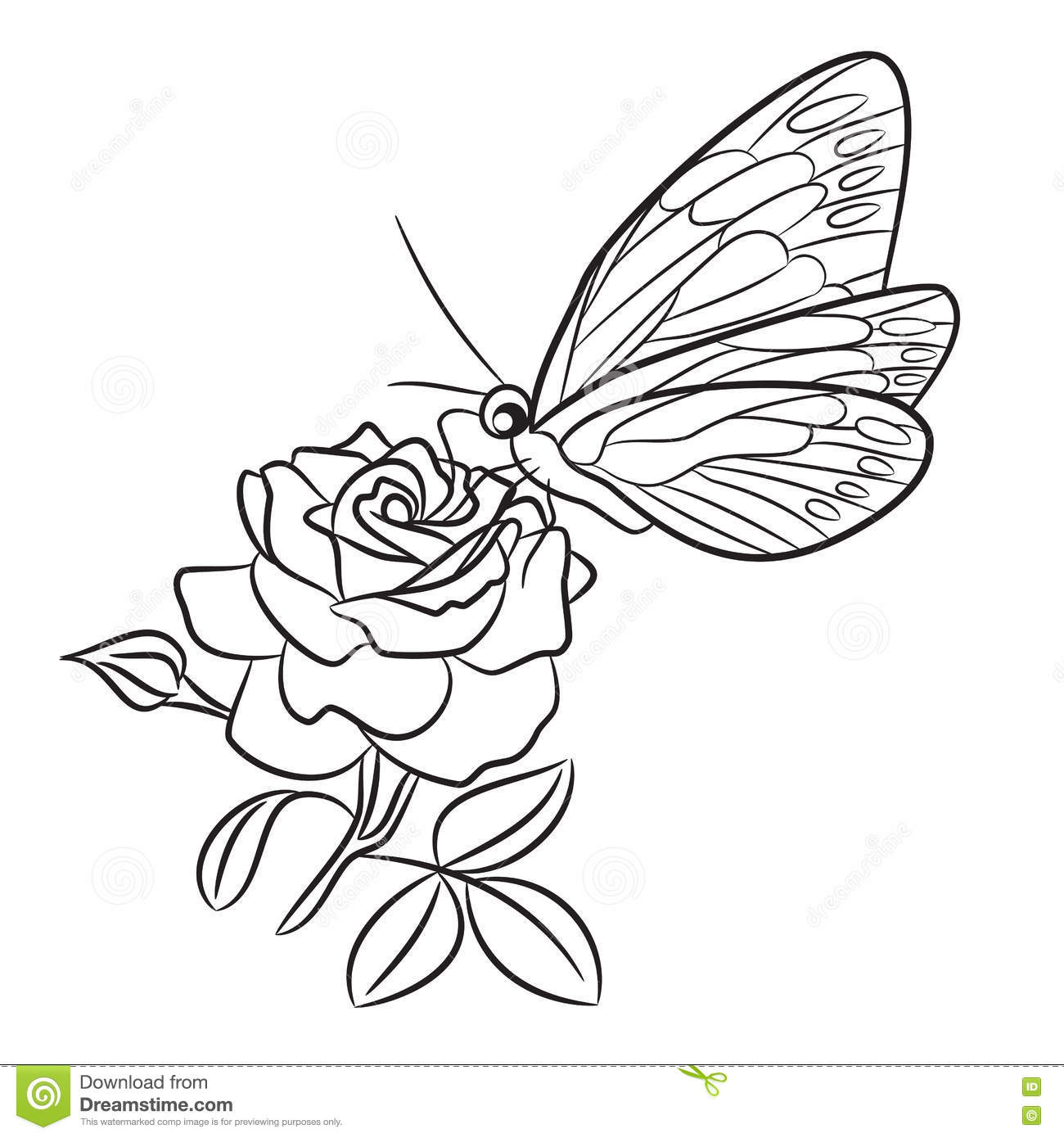 Butterfly On Blooming Rose, Small Bud And Leaf. Stock ...