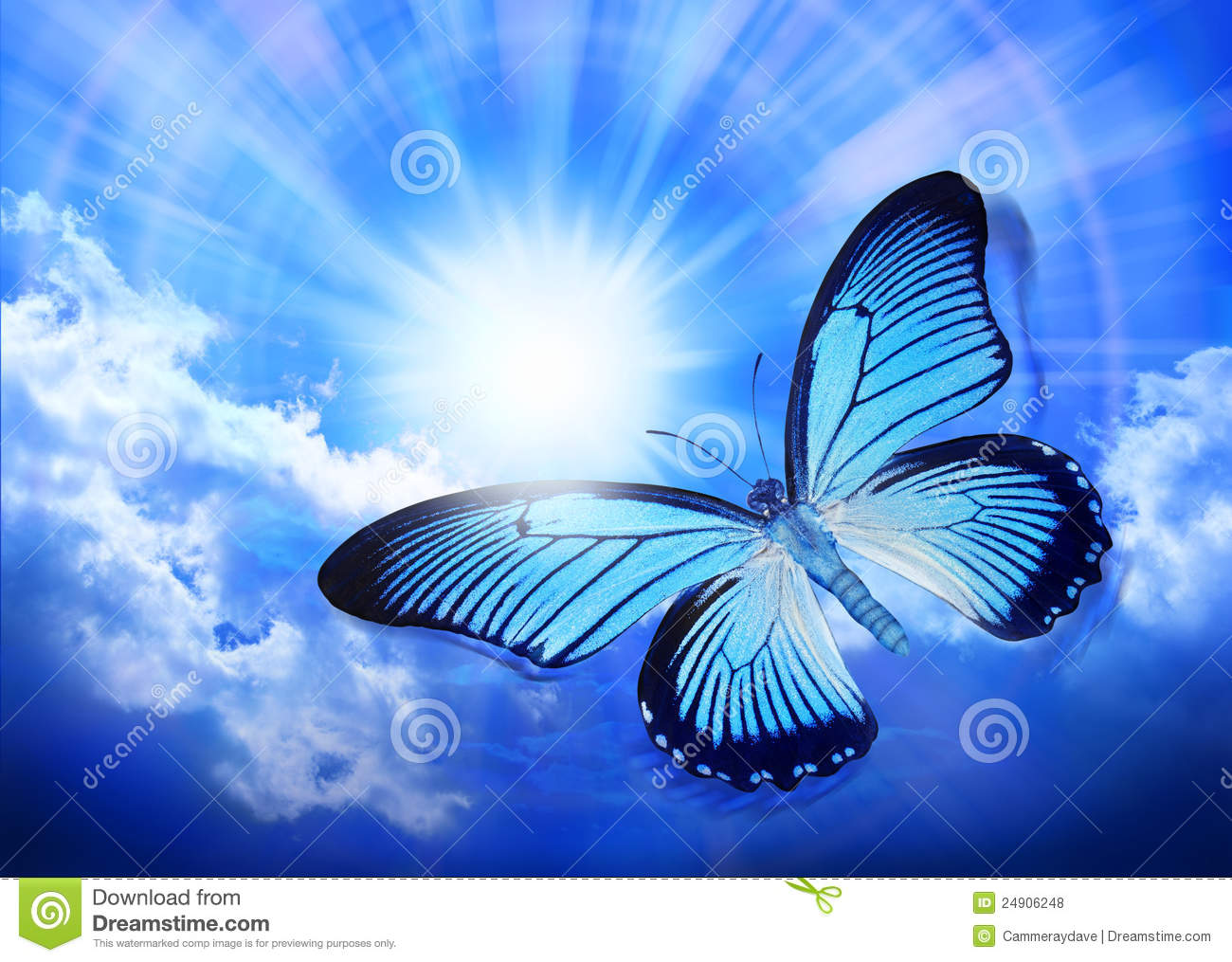 Download Butterfly Blue Sky Sun Nature Stock Photo - Image of beauty, inspiration: 24906248