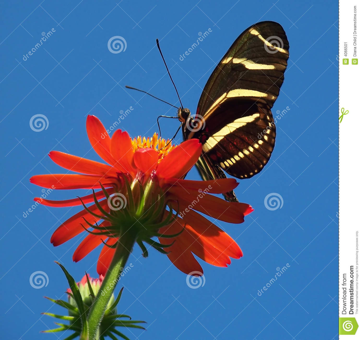Butterfly on bright red flower