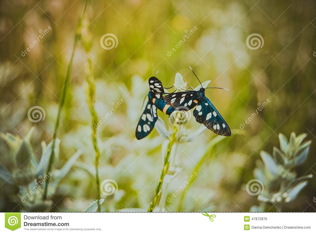 Butterfly, butterfiles, background