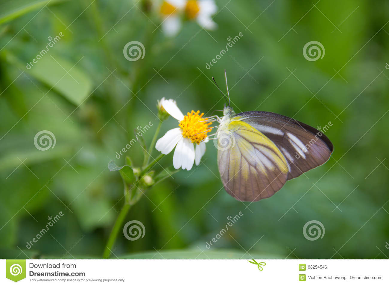 A butterfly stock photo image of beauty integrity flowers 98254546 a butterflyan animal that represents the integrity of the forest butterfly is also mixed with natural flowers gaysorn izmirmasajfo