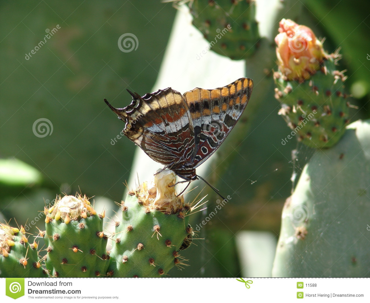 Butterfly & Cactus