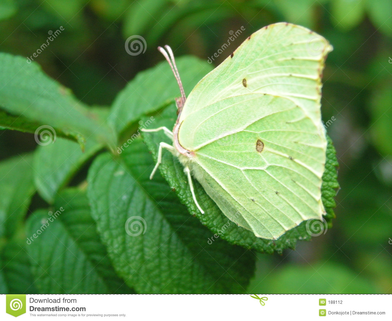 Butterfly Camouflage Stock Photography - Image: 188112