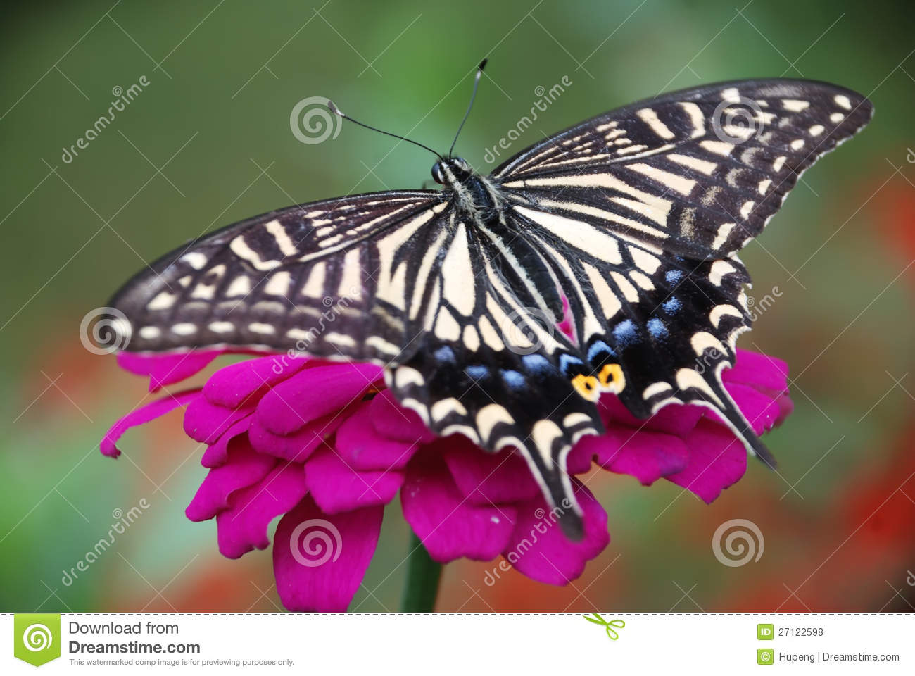Butterfly and flower