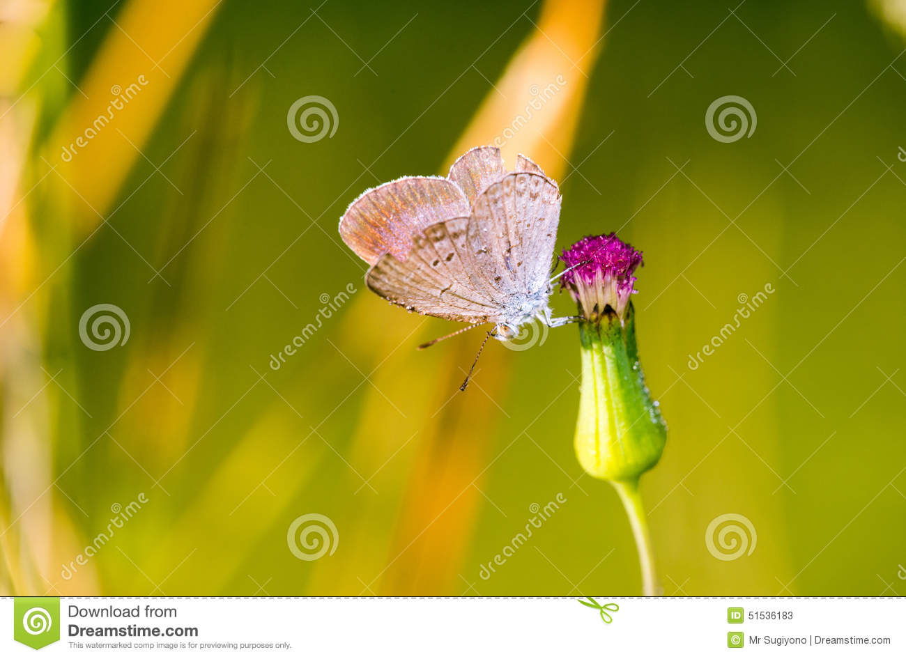 Butterfly on flower stock image. Image of butterfly, green - 51536183