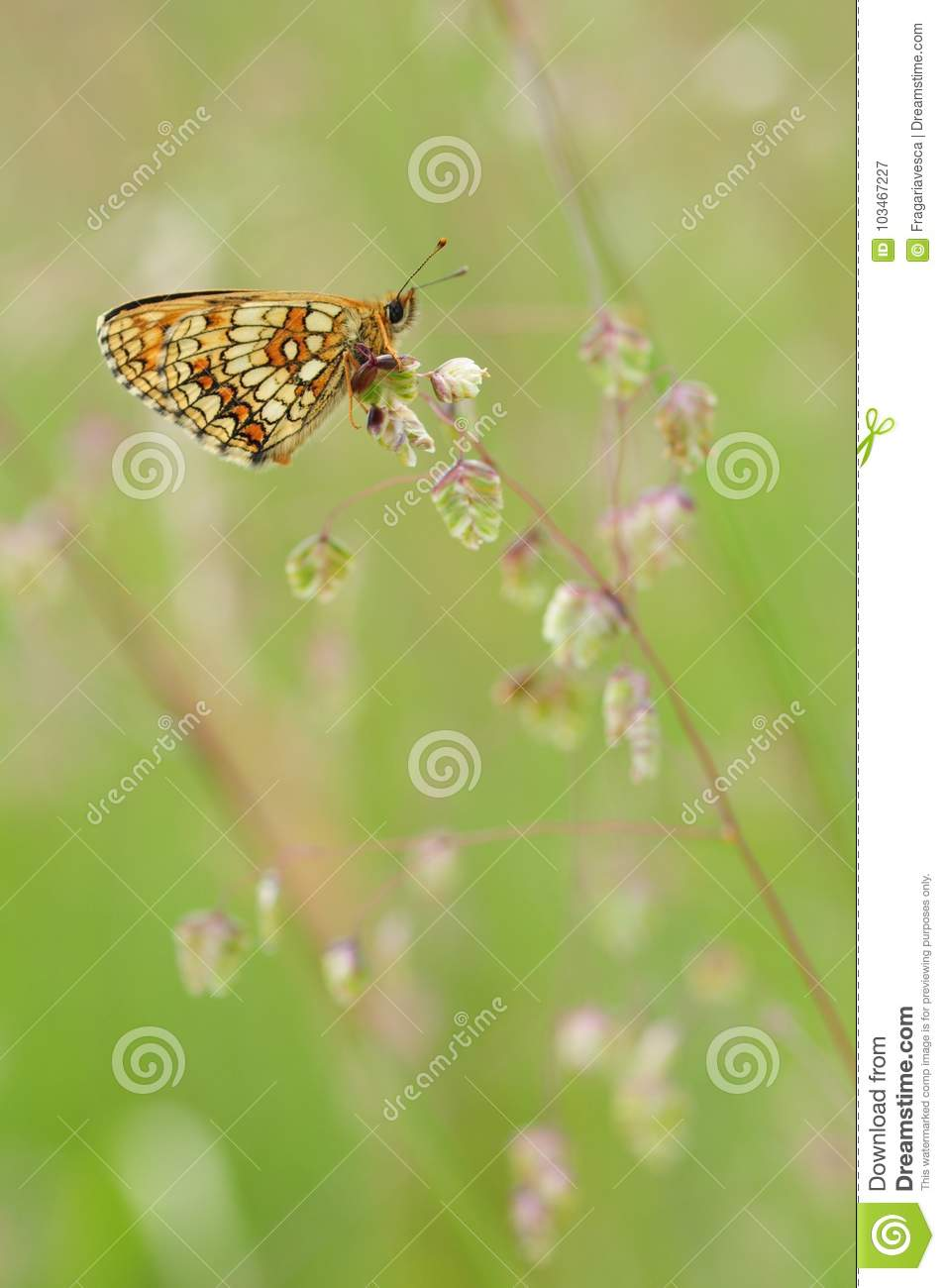 Butterfly on a flower in the meadow