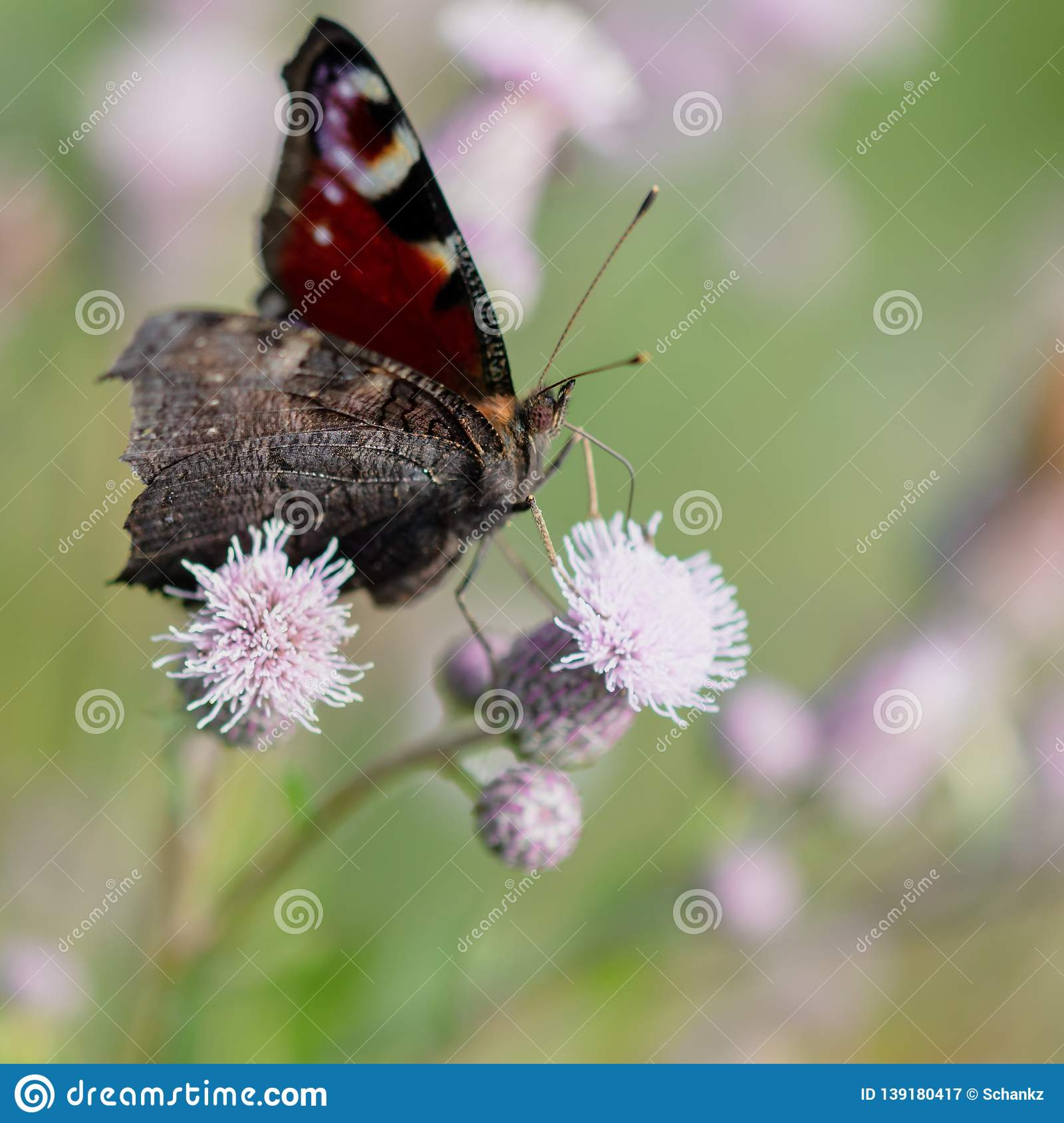 Butterfly on a flower in the nature