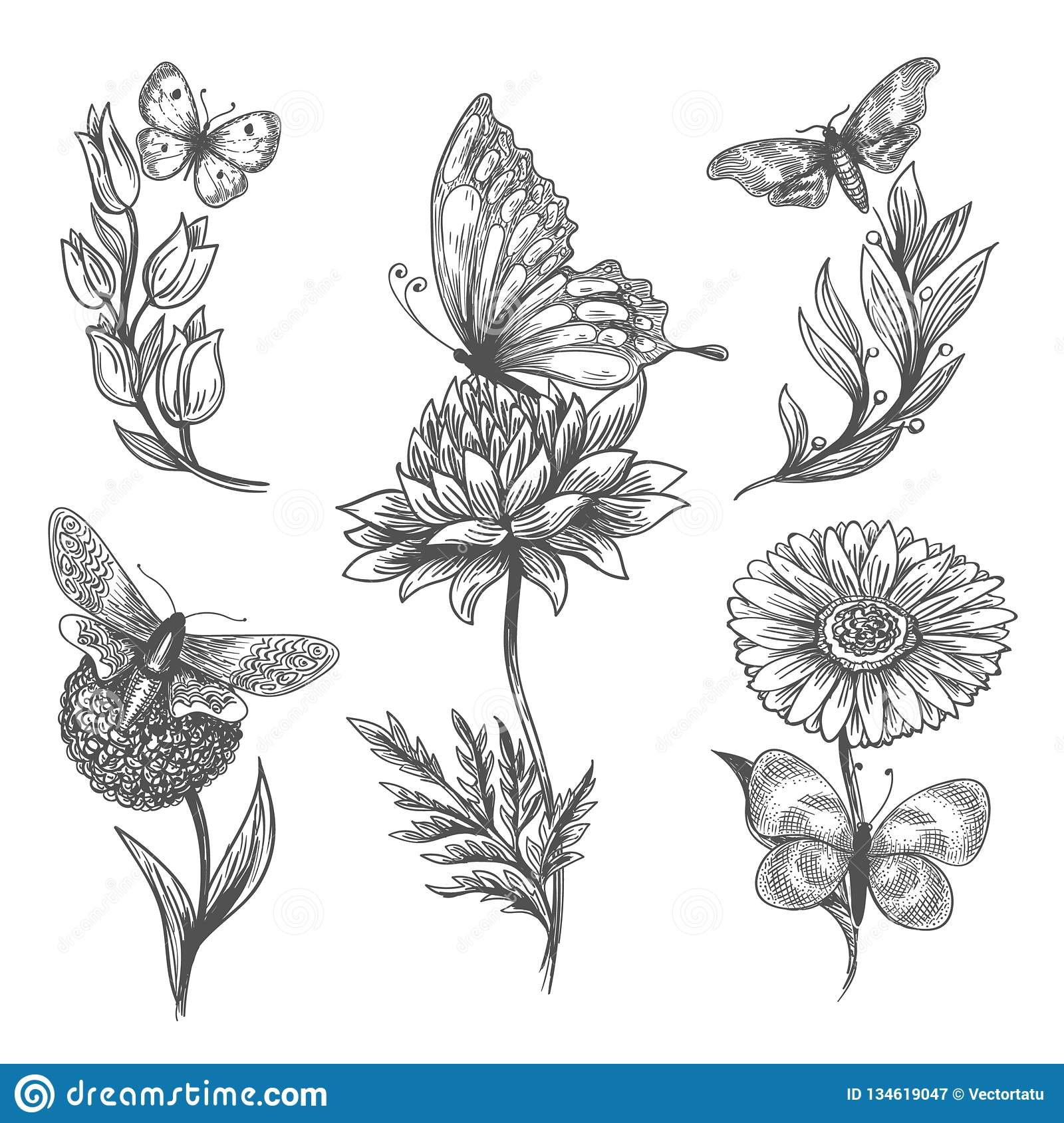 Butterfly And Flowers Doodle Sketch Icons Stock Vector