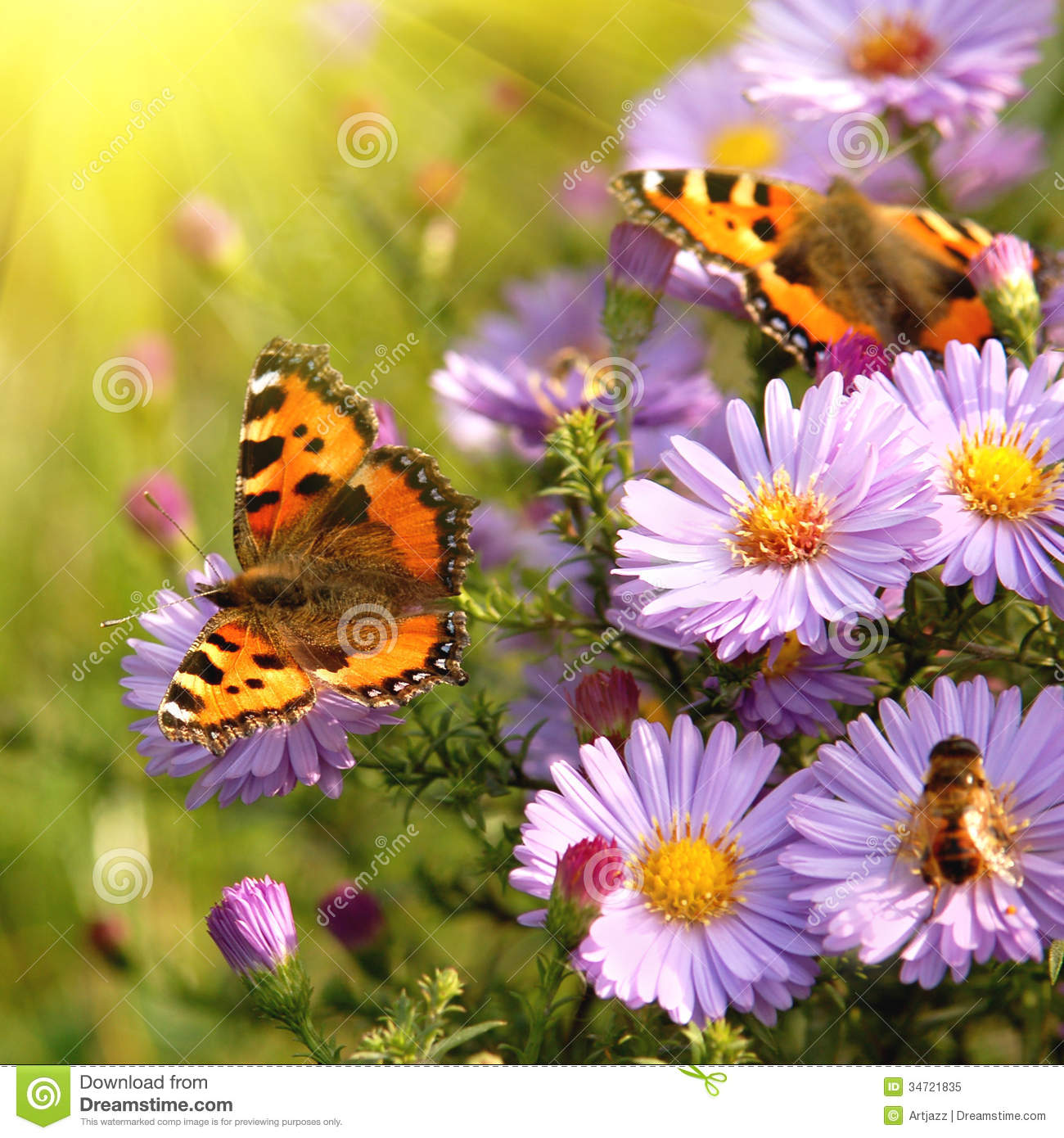 Butterfly On Flowers Royalty Free Stock Photo