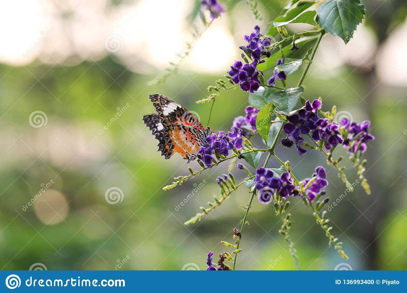 Butterfly fly in morning nature stock photo