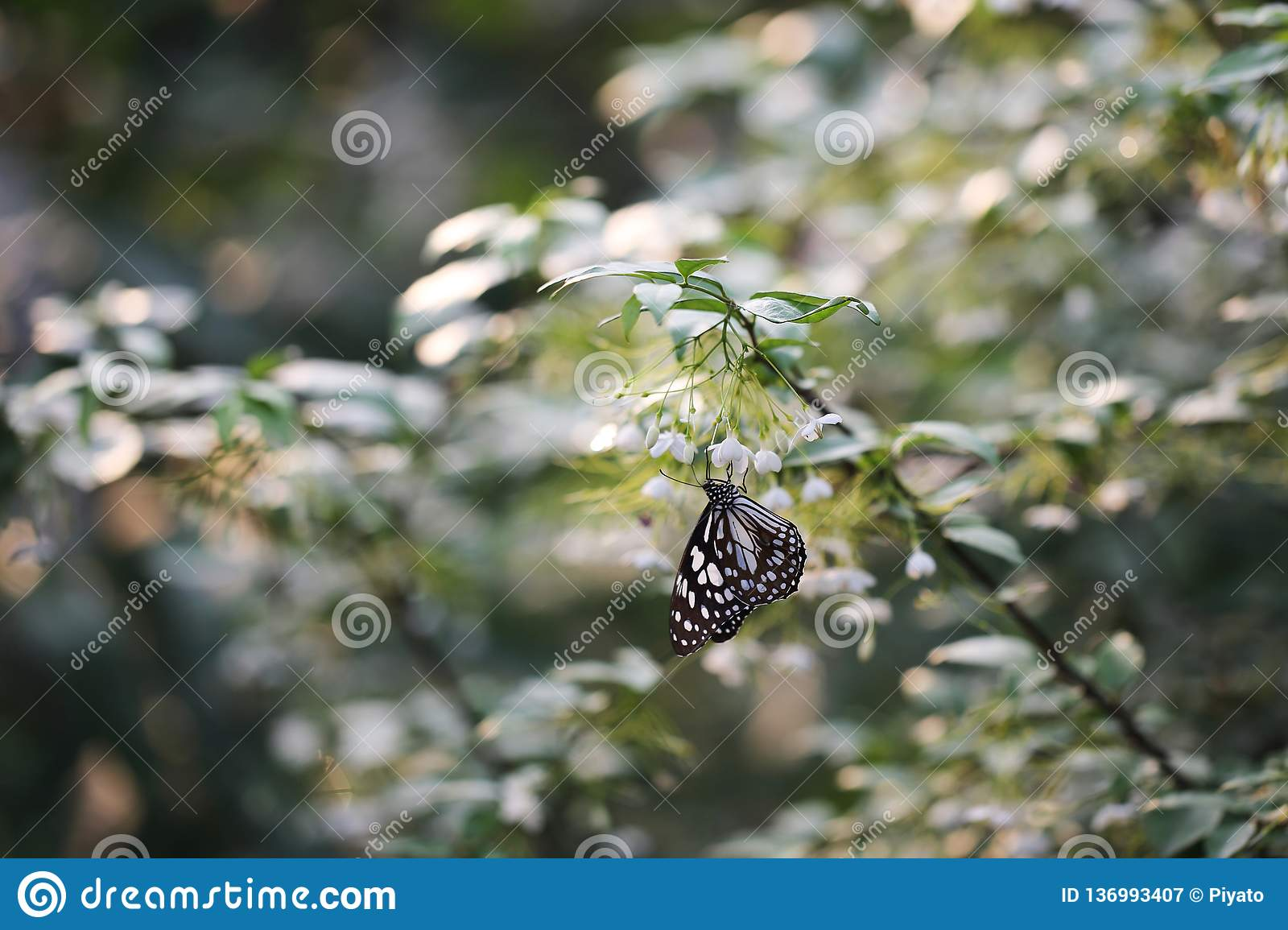 Butterfly fly in morning nature royalty free stock photography