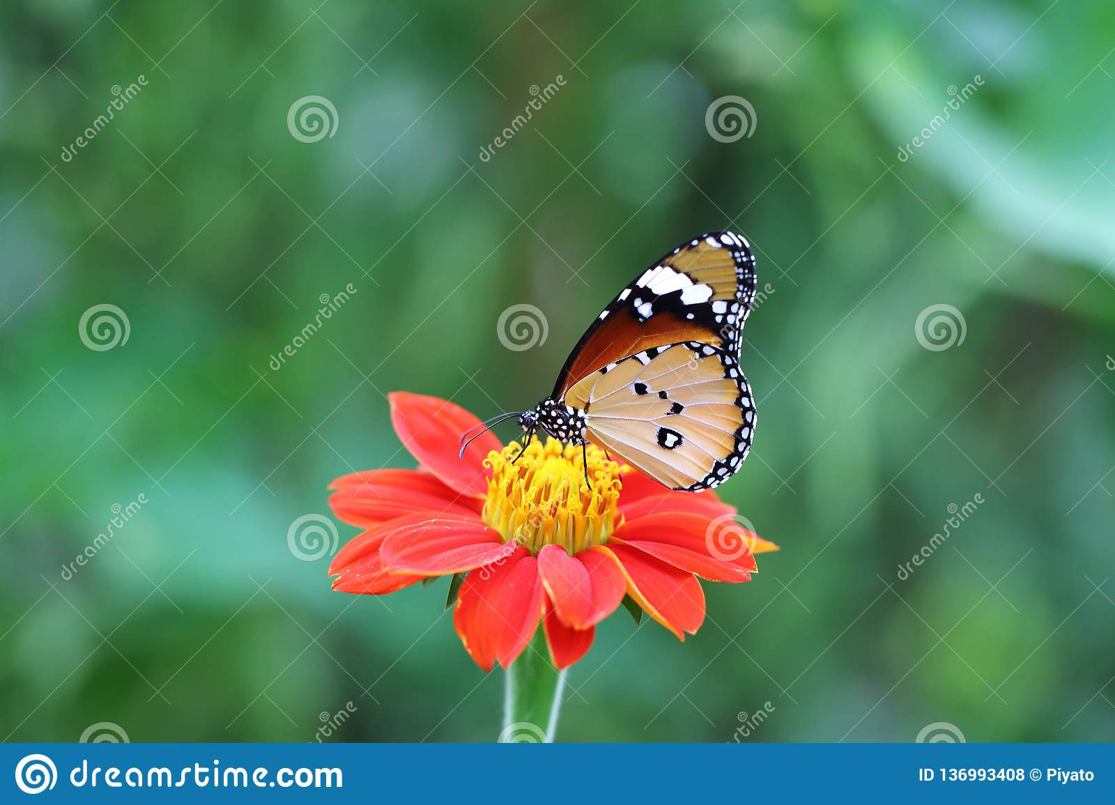Butterfly fly in morning nature royalty free stock photos