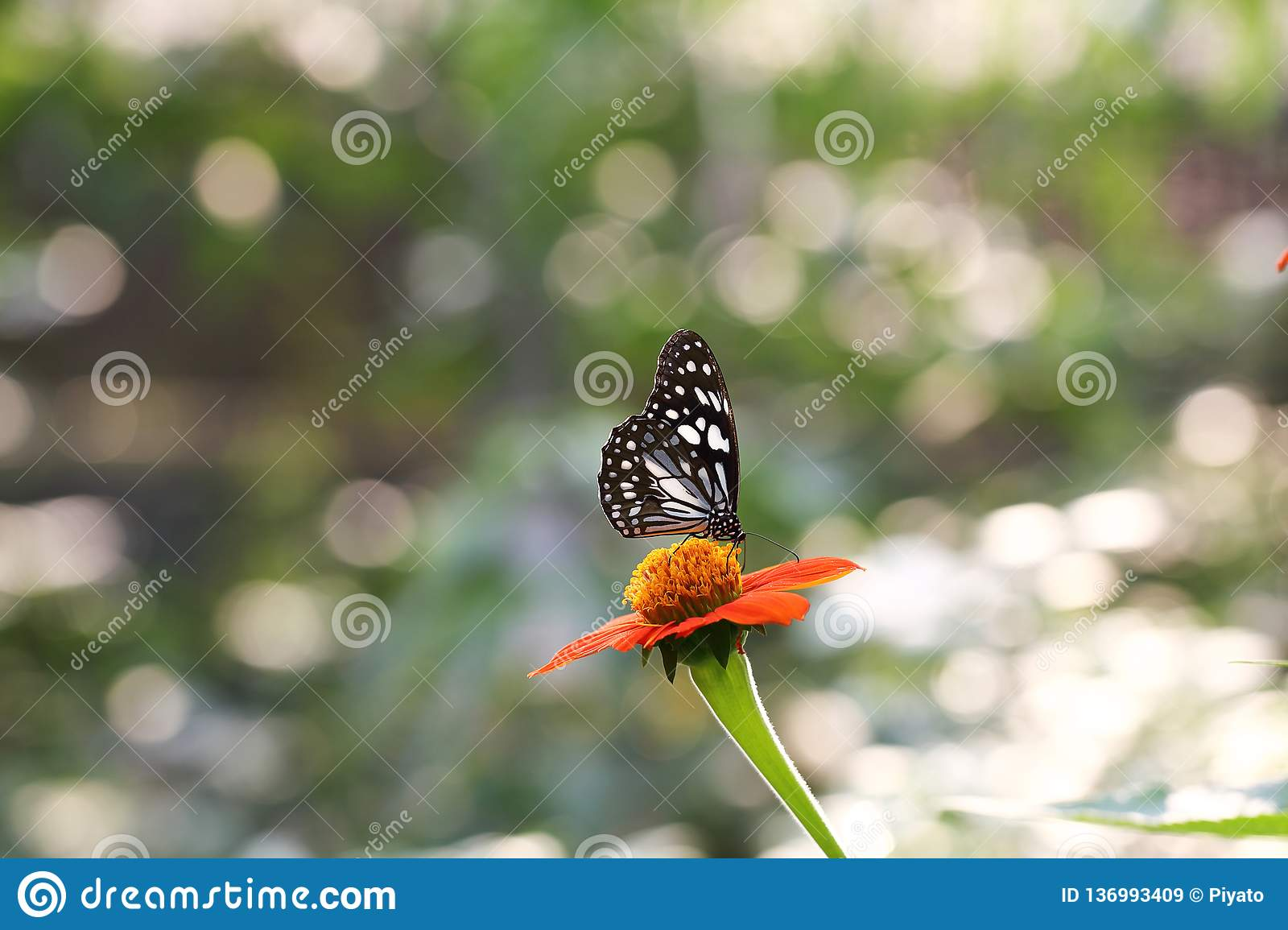 Butterfly fly in morning nature royalty free stock images