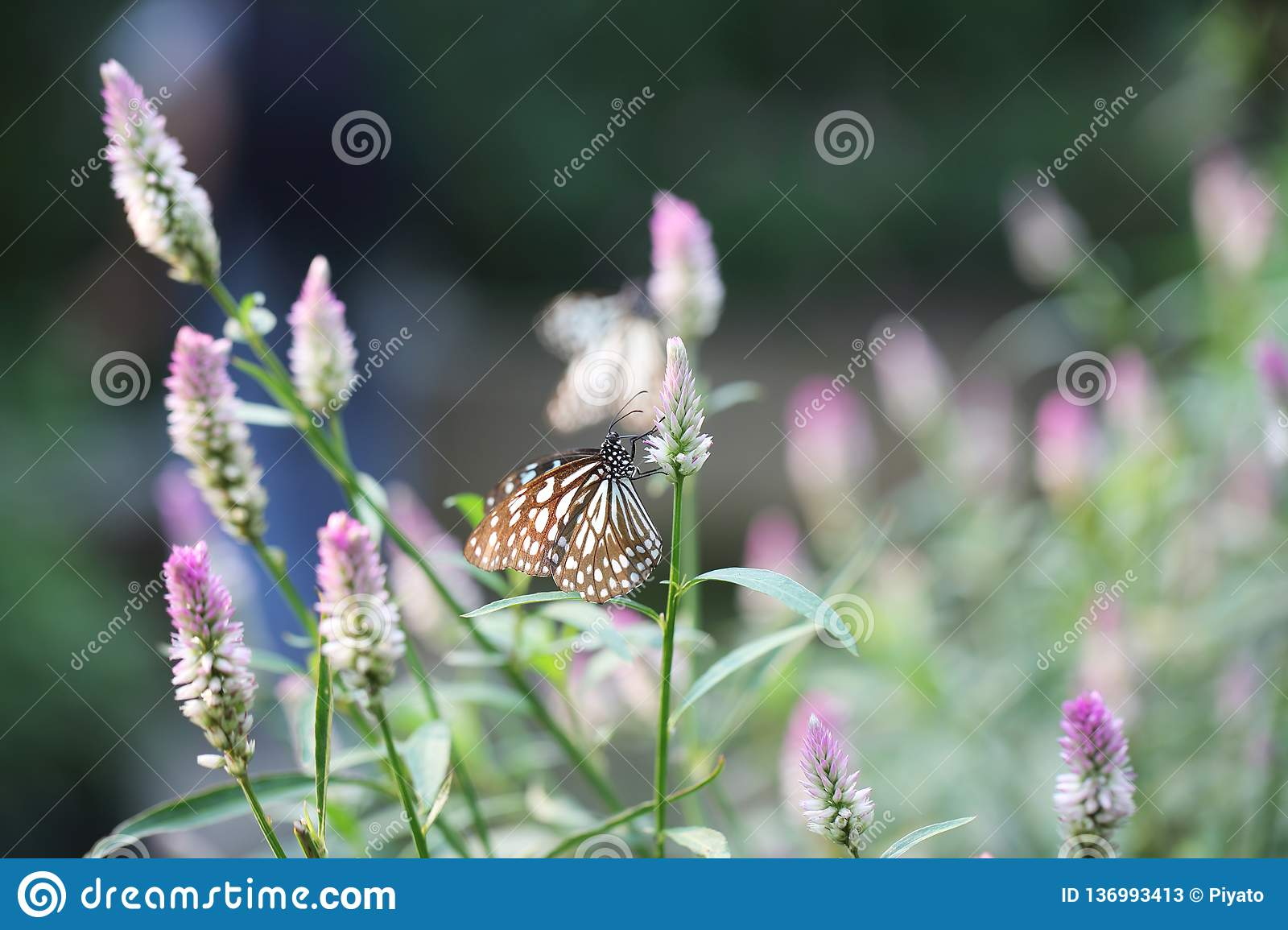 Butterfly fly in morning nature stock photos