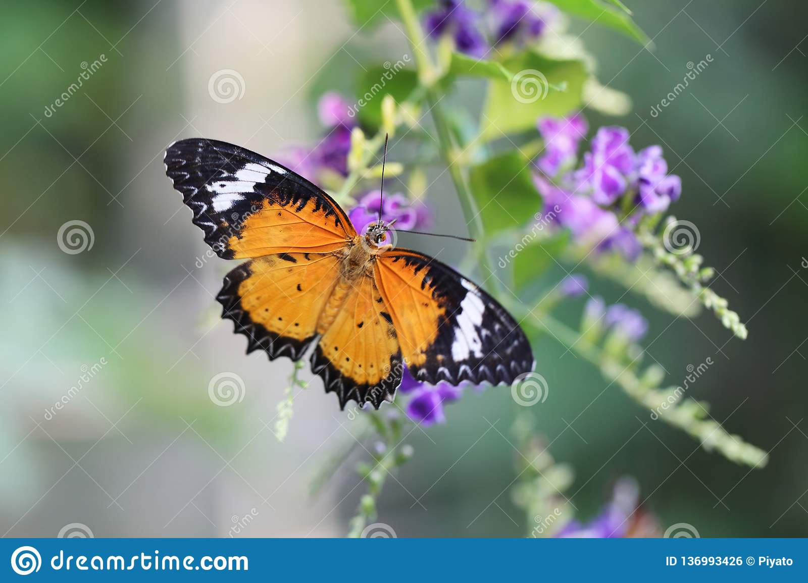 Butterfly fly in morning nature royalty free stock image