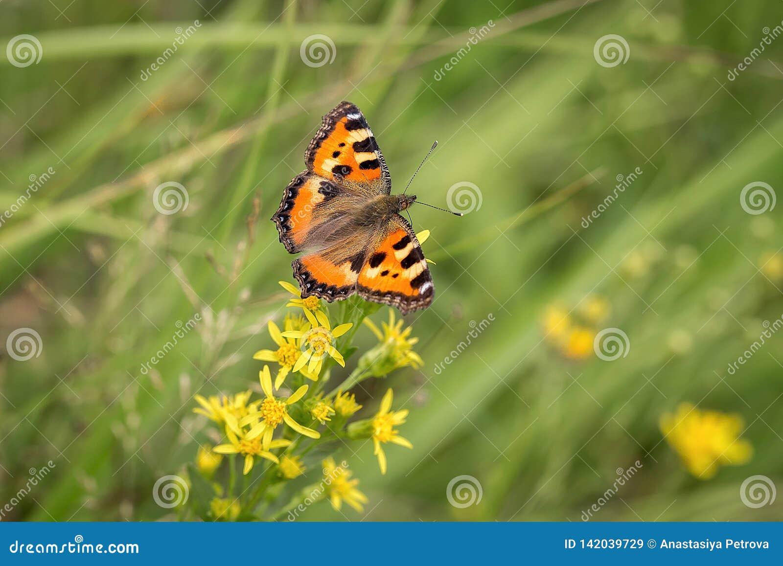 Butterfly in the green field
