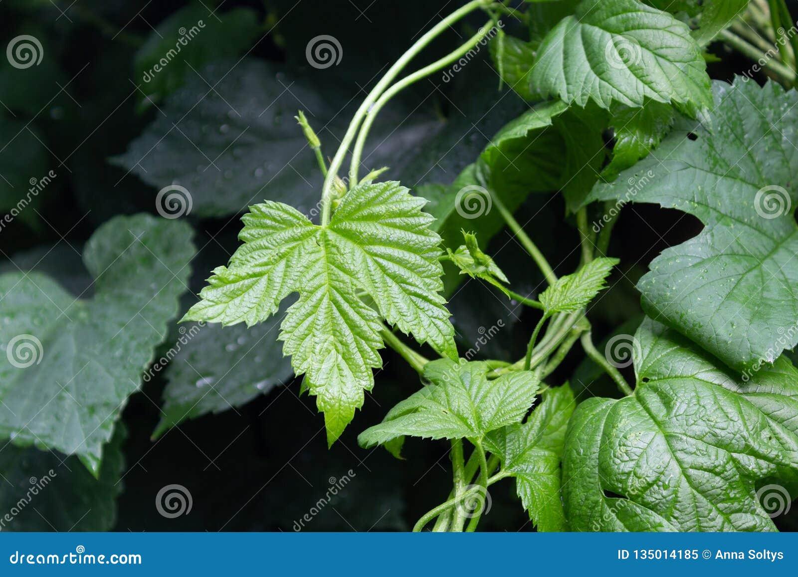 Butterfly in green foliage