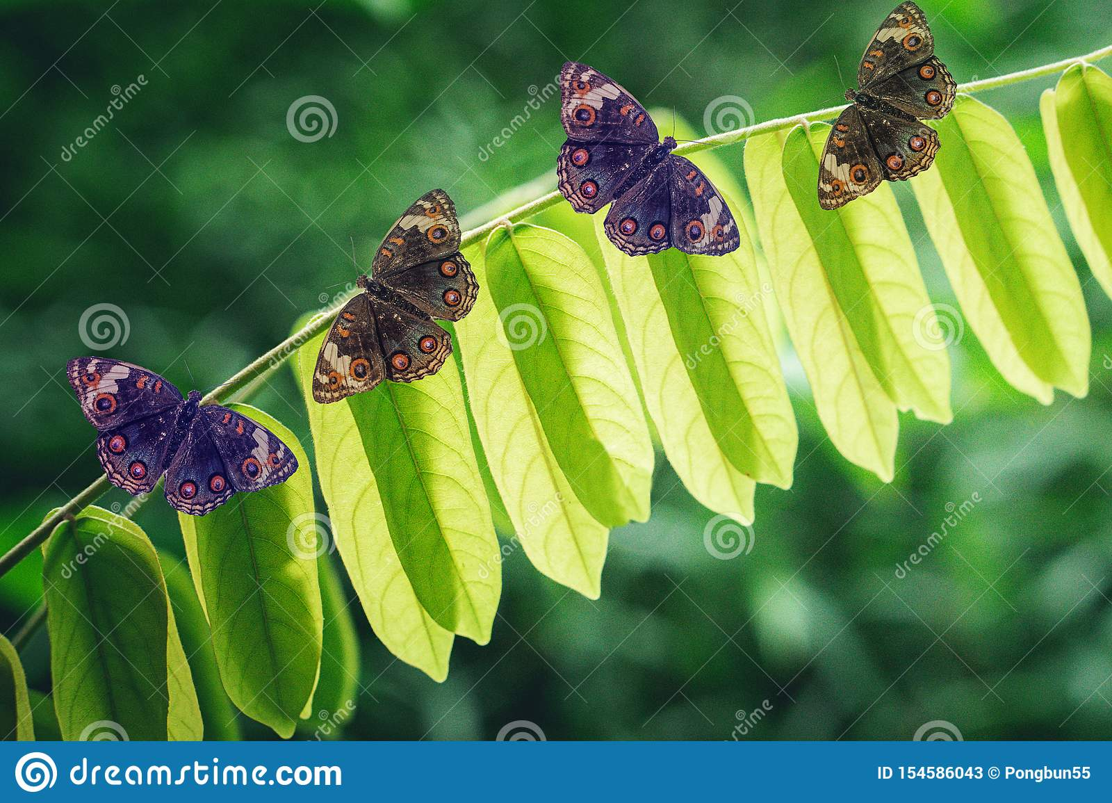 Butterfly On Green Leaves Spring Nature Background Stock Image