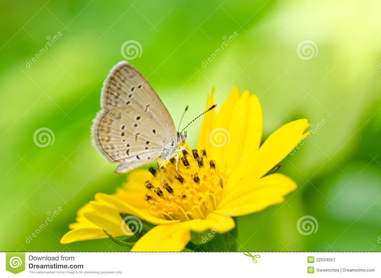 Butterfly In Green Nature Royalty Free Stock Photography - Image ...