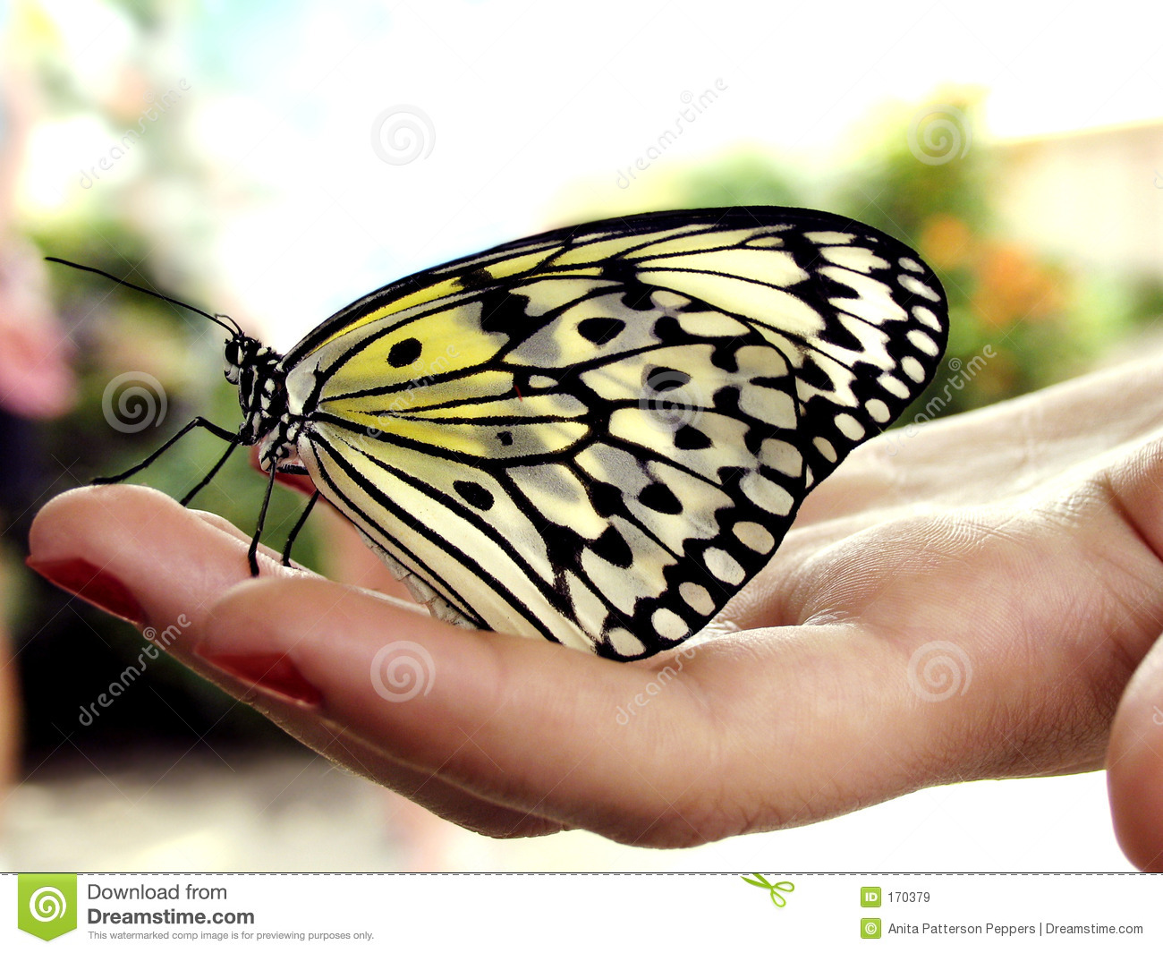 Uncategorized Butterfly Hand butterfly hand stock images 6255 photos on royalty free images