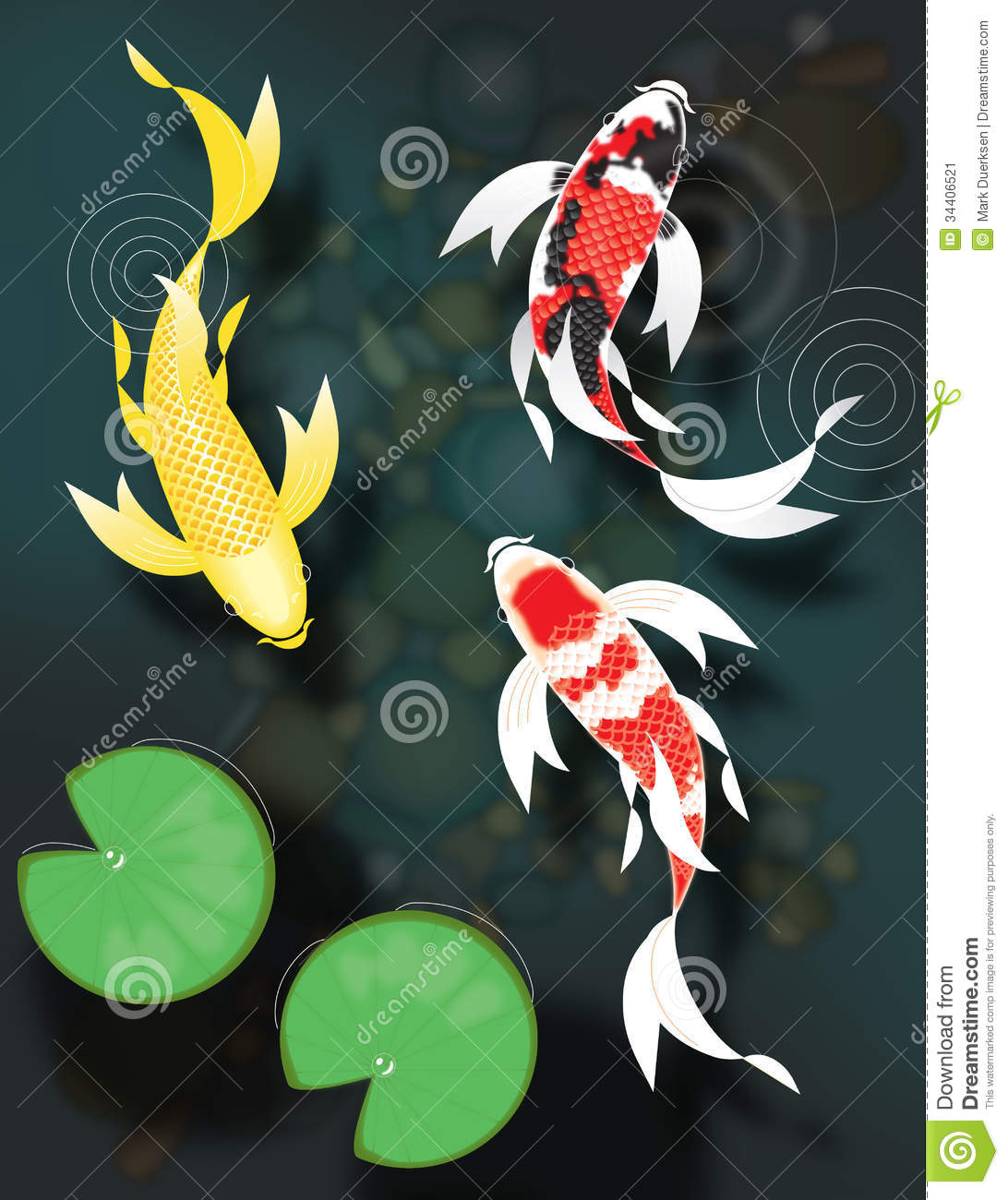 Butterfly koi swimming in pond stock illustration for All black koi fish